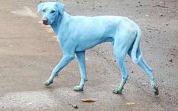 """Chó đột nhiên """"đổi màu"""" lông xanh sau khi bơi trên sông: Hé lộ nguyên nhân bất ngờ"""