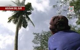 Giải cứu thành công người đàn ông sống suốt 3 năm trên ngọn cây dừa