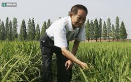 Một nhà khoa học Trung Quốc nghĩ ra cách trồng lúa trong nước ngập mặn