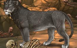 """Khoa học đã giải mã được bí ẩn cuồng sát của cặp """"quái thú ăn thịt người"""" Tsavo năm 1898"""
