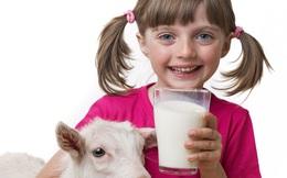 7 lý do khiến nhiều người Ân Độ thích uống sữa dê