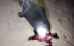 Bình Thuận: Hải cẩu lên bờ chơi đùa với người dân trên bãi biển đã bị đánh chết