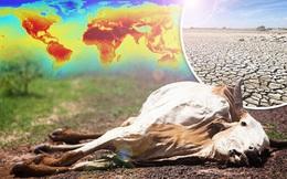 Chủ tịch IPCC: Vẫn có thể cứu vãn Trái Đất, nhân loại đang nỗ lực phi thường!