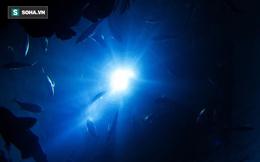 """Phát hiện """"dị vật"""" trong bụng loài sống ở vực sâu nhất Trái Đất: Nhà khoa học giật mình!"""