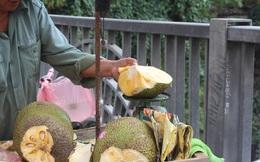 Mít Thái: Trung Quốc thu mua ồ ạt, Hà Nội chỉ còn sản phẩm loại hai
