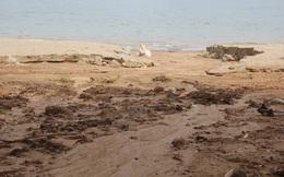 Đà Nẵng báo cáo Thủ tướng vụ sạt lở ở khu du lịch biển Tiên Sa