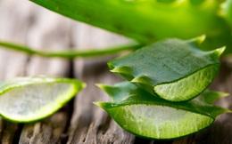 Đừng nghĩ lô hội chỉ để bôi da, loại cây này còn giúp trị dứt điểm vô vàn bệnh mà bạn không hay biết
