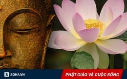 2 lần đi lấy nước cho Đức Phật, vô tình gặp 1 con bò, đệ tử ngộ ra bài học sâu sắc ở đời!