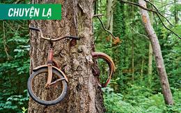 """Chiếc xe đạp bị """"nuốt chửng"""" giữa thân cây ở Washington"""