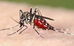 5 cách chống muỗi đơn giản không dùng hóa chất phòng sốt xuất huyết