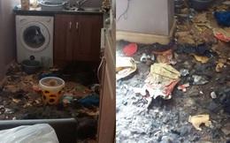 Bỏ mặc 2 chú chó trong nhà đến chết đói, người chủ nhận ngay quả đắng cho hành vi độc ác của mình