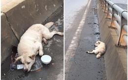 Chú chó bị đâm trên phố Hà Nội: Lòng thương và lời đề nghị thẳng thắn tới lạnh người