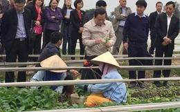 Phó Chủ tịch QH: An toàn thực phẩm của Hà Nội đã đến giới hạn đỏ!