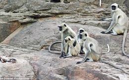 Camera giấu kín bắt được khoảnh khắc khó tin: cả đàn khỉ xót thương cho một con robot