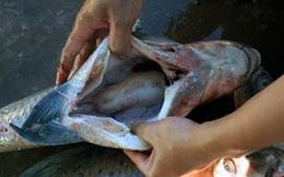 Chuyên gia thực phẩm: Nếu gặp 7 loại cá này, bạn tuyệt đối không nên mua về ăn