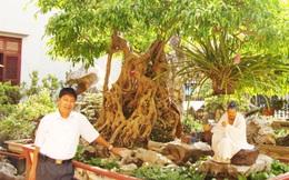 Mãn nhãn với những vườn cây tiền tỉ