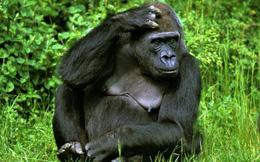Hơn 700 loài có nguy cơ tuyệt chủng vì biến đổi khí hậu