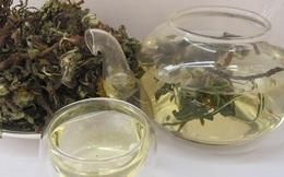 Loại trà chữa nhiều bệnh được Đông y khen ngợi từ cổ chí kim: VN có nhưng ít người dùng