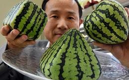 Tại sao người Nhật bỏ 600 triệu đồng mua một quả dưa?