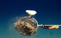 Phát hiện mỏ nguyên liệu quý dùng làm pin Mặt trời dưới đáy biển