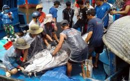 Ngư dân Bình Định câu được cá ngừ lớn nhất từ trước đến nay