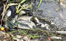 Vụ cá chết tại Cà Mau: 100% mẫu nước vượt ngưỡng cho phép