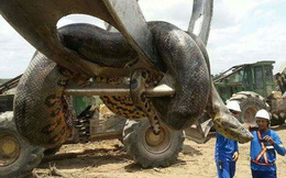 Thế giới không chỉ có 1 loài anaconda như trong ảnh, tất cả đều vô cùng đáng sợ!