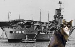 """Chú mèo """"tai họa"""": Nhấn chìm 1 thiết giáp hạm, 3 khu trục hạm và 1 tàu sân bay"""