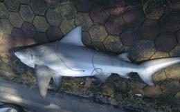 Thực hư thông tin xuất hiện cá mập ở vùng biển Quảng Ninh
