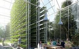 Ngôi làng trong mơ ở Hà Lan: Tự sản xuất thực phẩm sạch, tự cấp điện và xử lý chất thải khép kín