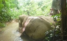Thảm cảnh những chú voi châu Á: Hết bị chặt ngà đến bị lột da dã man để làm đồ trang sức