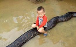 Clip sốc: Bé trai chơi đùa cùng trăn khổng lồ trong sân nhà ngập nước sau lũ
