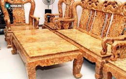 """Vì sao cây gỗ trả giá 1 triệu USD không bán ở Thanh Hóa lại được xem là """"báu vật""""?"""