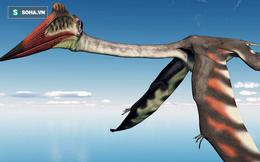 """Hé lộ """"gã khổng lồ"""" mới thống trị bầu trời - nỗi ám ảnh của khủng long mặt đất"""