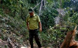 """Truy bắt """"lâm tặc"""" nhóm kiểm lâm bị kẹt trong rừng 9 ngày"""