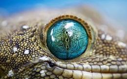 """""""Mắt thần"""" trong thế giới hoang dã"""