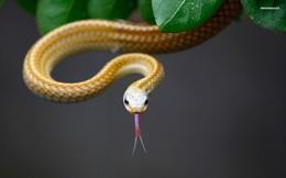 Động vật nhìn thế giới bằng một con mắt rất khác chúng ta, con người dù tiến hóa cao cấp cũng còn lâu mới có khả năng này