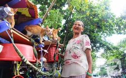 """Không gia đình, cụ bà 87 tuổi ngủ lề đường chăm bẵm """"đàn con"""" 20 chú mèo bị bỏ rơi giữa Sài Gòn"""