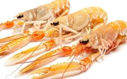 Những hải sản được coi là siêu thực phẩm cho cơ thể