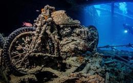 Cùng nhiếp ảnh gia lặn xuống đáy biển sâu để chiêm ngưỡng những hình ảnh này
