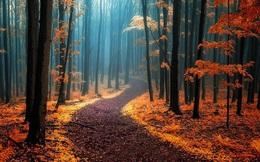 Ngắm 15 khu rừng sở hữu vẻ đẹp đầy ma mị như trong truyện cổ tích