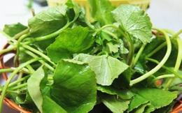 Những loại thảo dược dễ tìm có tác dụng giải độc khẩn