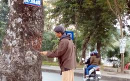 Lộ diện người lột vỏ hàng loạt cây xà cừ ở Hà Nội?