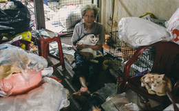 """Cụ bà cưu mang 50 """"đứa con"""" chó mèo trong căn nhà ẩm thấp ở Sài Gòn giờ ra sao?"""
