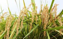 Nhiều doanh nghiệp Nhật muốn làm nông nghiệp ở Việt Nam