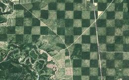 Khu rừng kỳ lạ nhìn từ trên cao trông giống hệt một bàn cờ với các ô vuông đều tăm tắp