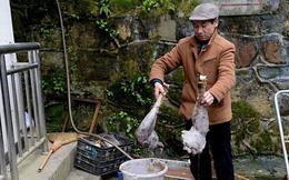 Chủ vườn thú bị chỉ trích vì cho các loài động vật ăn thịt nhau