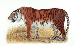 """11 sinh vật đã tuyệt chủng nhưng sắp được """"hồi sinh"""" nhờ các nhà khoa học"""