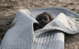 Bức ảnh thi thể bé gái quấn trong chăn gợi lên nỗi đau chiến tranh của trẻ em Iraq