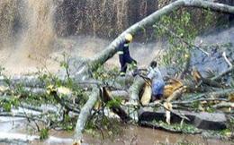 Bị cây rơi từ trên thác đè trúng, 20 người chết